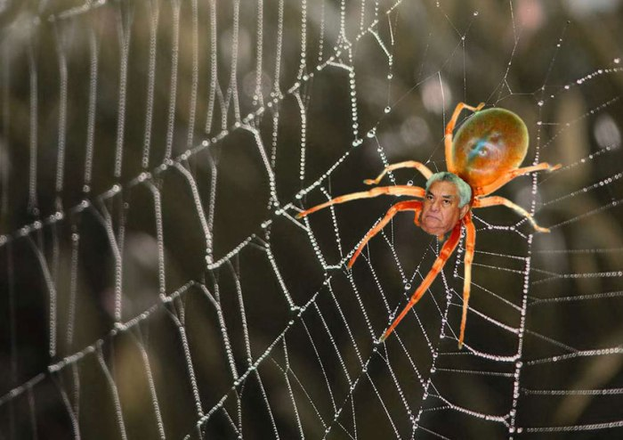tangled-web